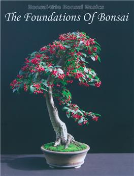 The Foundations of Bonsai